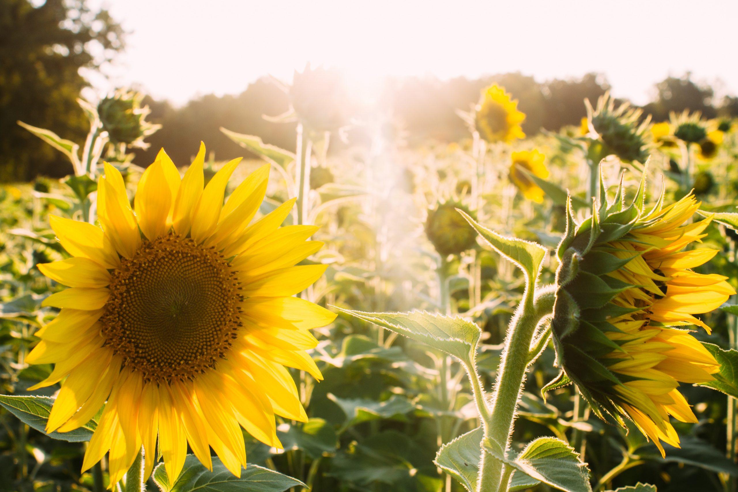 Envisager le futur solaire avec Energreen