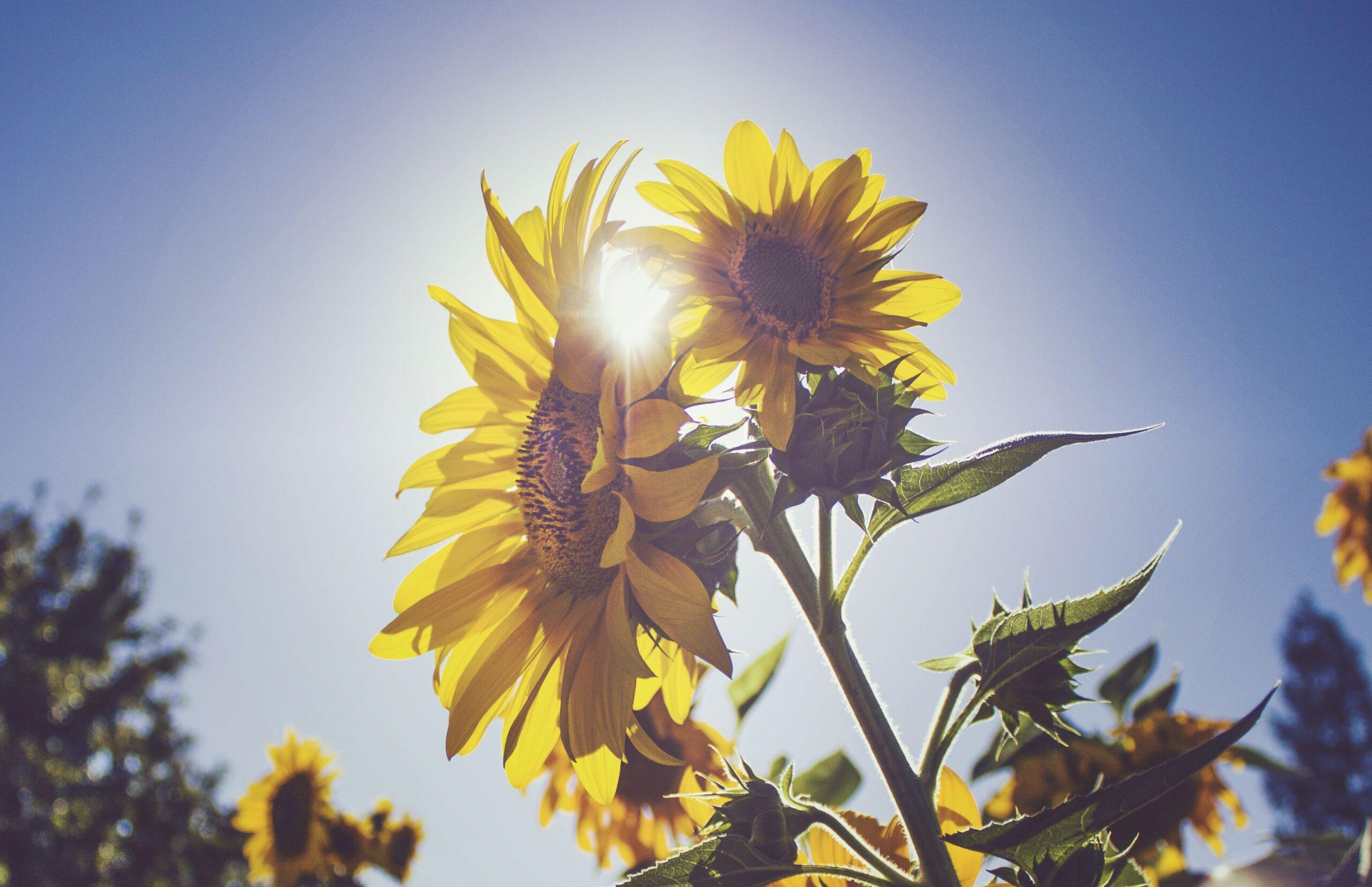 Le solaire un choix d'avenir   Energreen